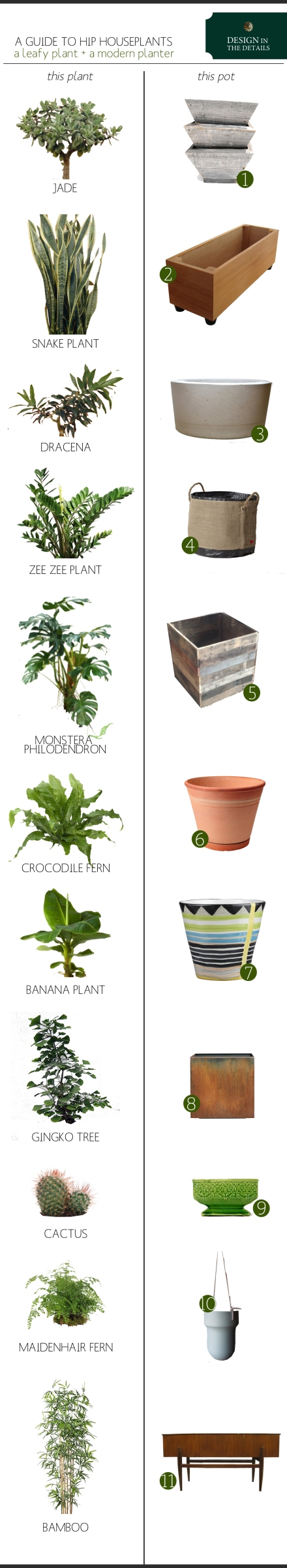 a-guide-to-hip-houseplants copy
